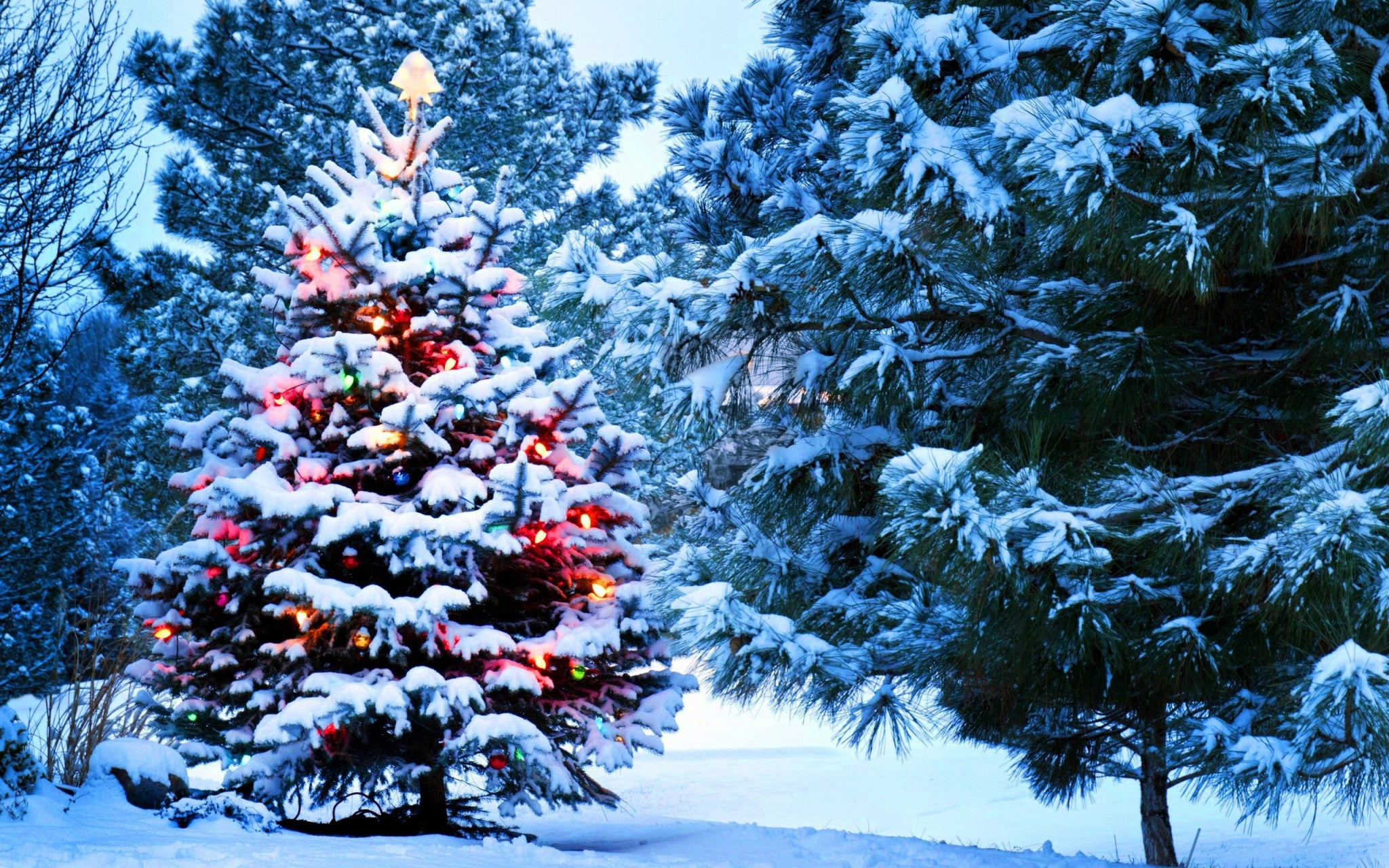 Christmas-snow-New-Year-tree-lights_2560x1600